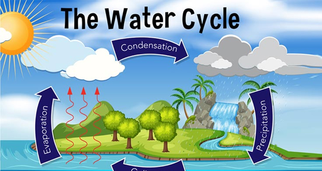 Science (Water cycle)